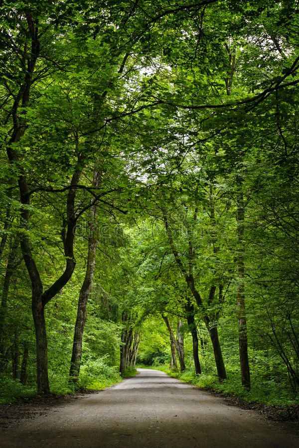 Free Road In The Green Forest. Stock Photo - 40874980