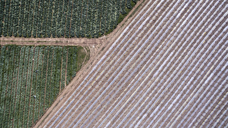 Download Road Junction Next To Sown Field Stock Image - Image: 83704243