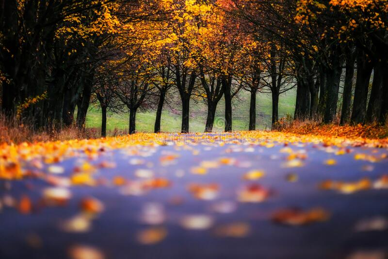 Road leading through the autumn alley stock images