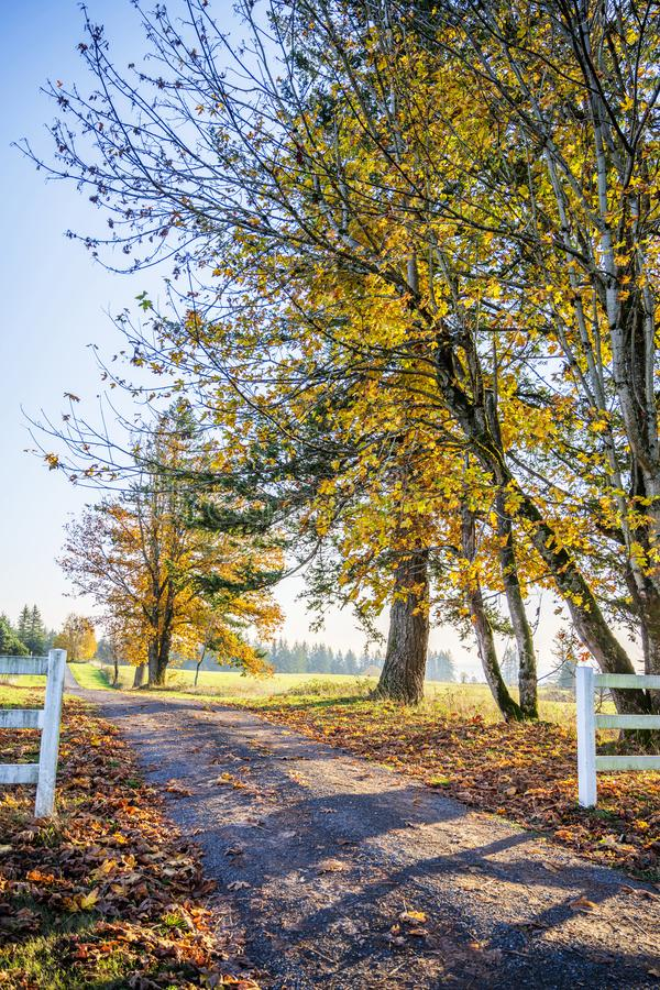 Autumn road with yellowed trees and fallen leaves burning in the. Road leading into the distance beyond the horizon with autumn yellowed trees is like a symbol stock photos