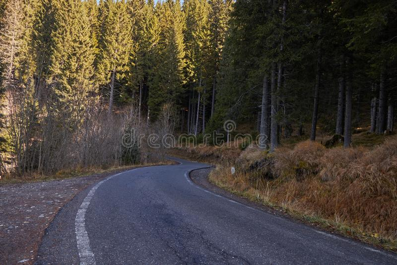 Road leading in the foret royalty free stock photos