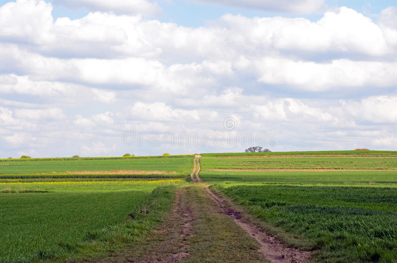 Road leading through grain. royalty free stock images