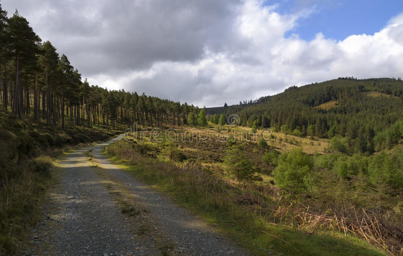 Road leading through the Irish forest, Wicklow Way stock photo