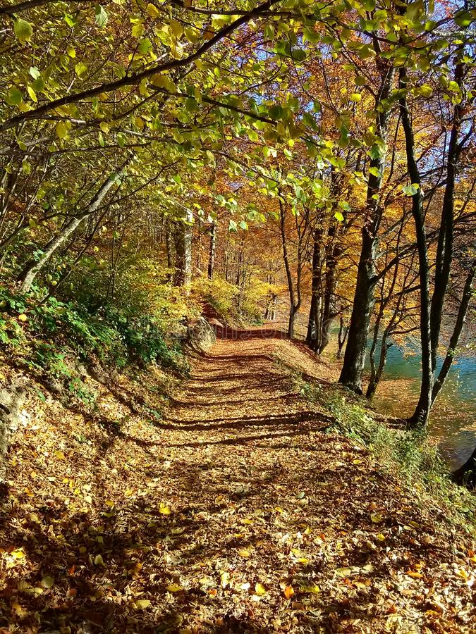 The road of leaves royalty free stock image