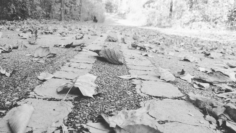 The road of leaves with trees royalty free stock images