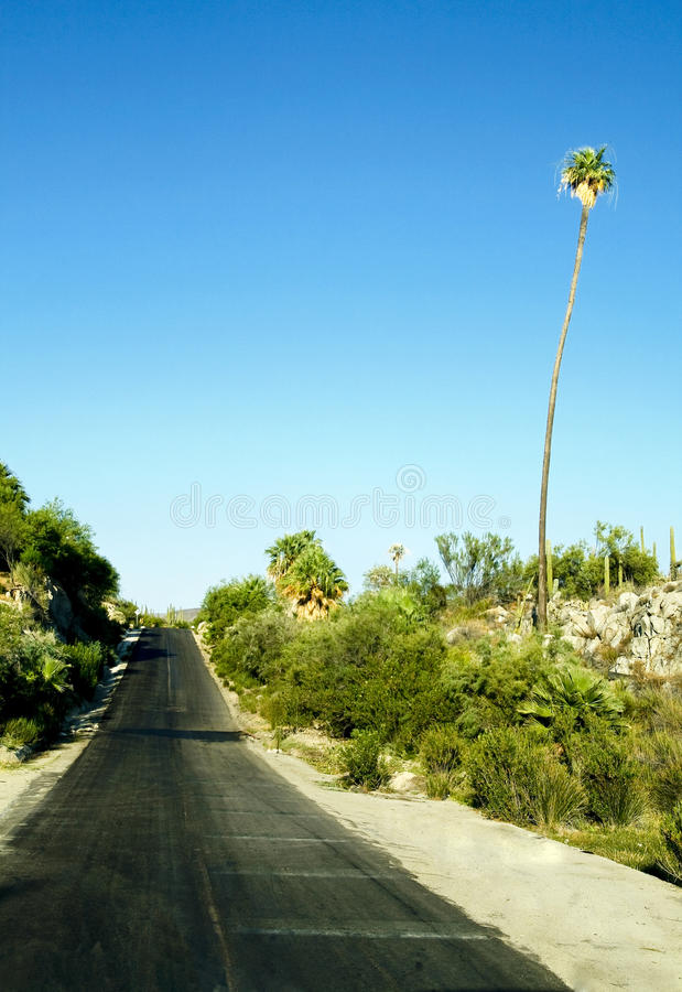 Road in Mexico royalty free stock images