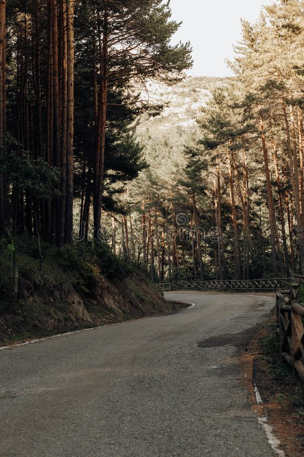 Road in the middle of the forest in the mountains of Madrid stock image