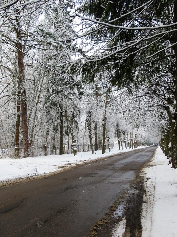 The road in the middle of snowy trees. The first snow, winter landscape.  royalty free stock photos