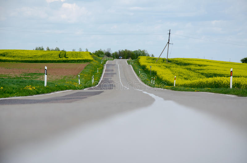 Road in the middle of yellow rapseed flowers stock photos
