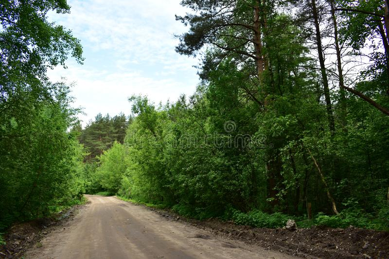 The road through the mixed forest, gloomy clouds in the sky, summer. The road goes on slightly cross-country stock photos