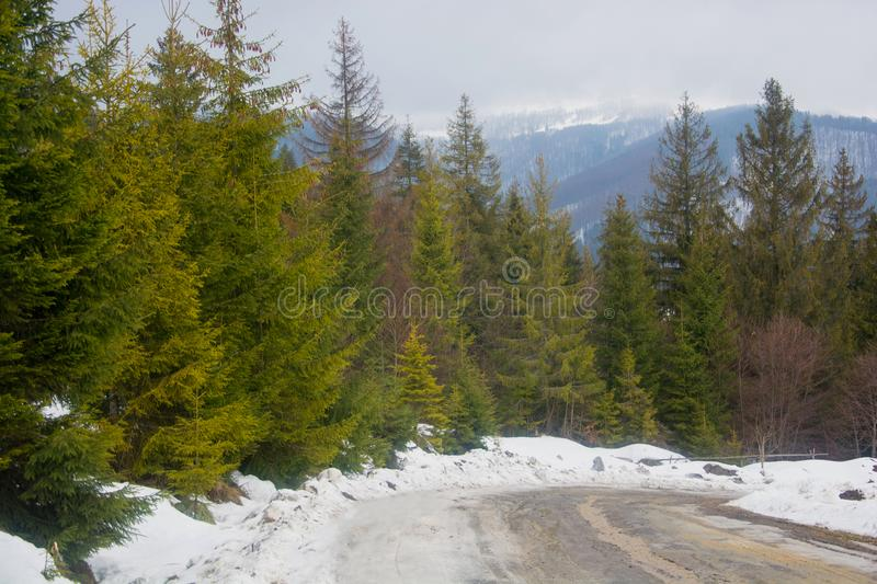 Road in the mountains in the spring, coniferous trees on the roadside. Road in early spring mountains in the spring, coniferous trees on the roadside royalty free stock photography