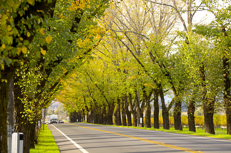 Download Road in Napa stock image. Image of sonoma, trees, canon - 66807
