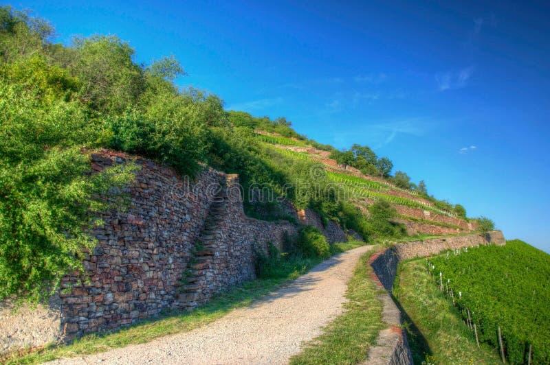 Road near Burg Ehrenfels, Ruedesheim in Hessen, Germany royalty free stock photography