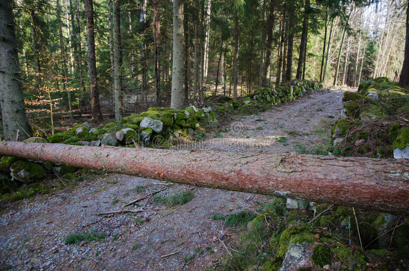 Download Road obstacle stock photo. Image of blocked, season, across - 51941214
