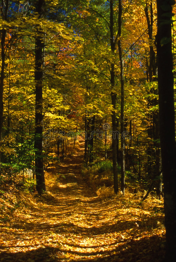 Free Road Of Autumn Color Royalty Free Stock Image - 4714196