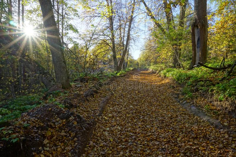 Road in old park with autumn leaves and sun among trees. Russia, Leningradskaya area. Brigth colors of autumn royalty free stock image