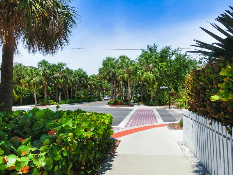 The road and trees at Naples, Florida royalty free stock photos