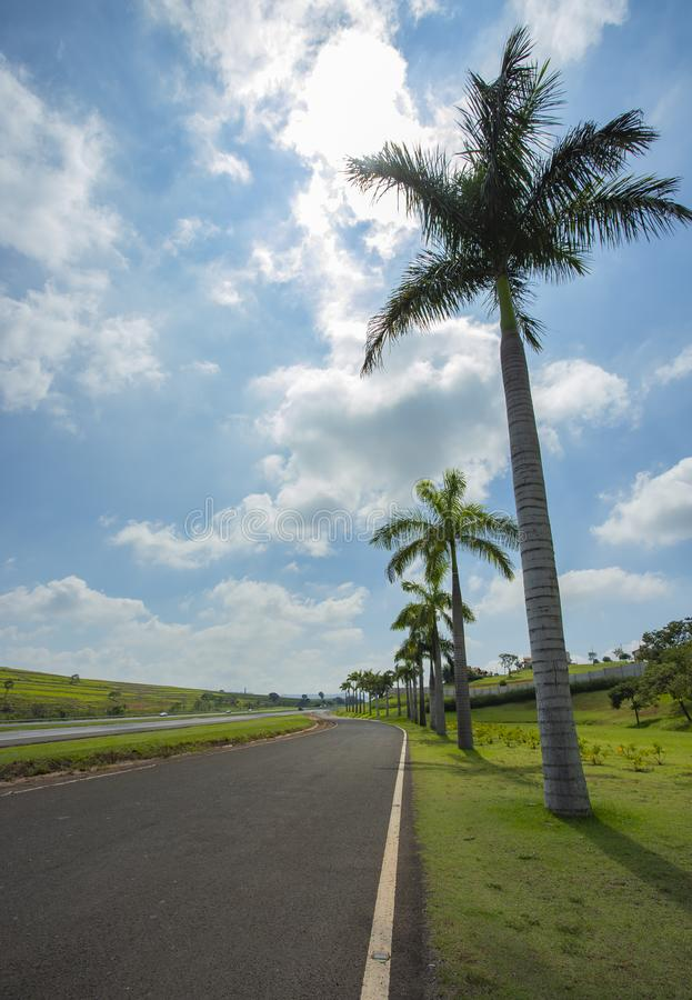 Nice asphalt road with palm trees against blue sky and cloud. Road with palm trees. Nice asphalt road with palm trees against blue sky and cloud royalty free stock photography