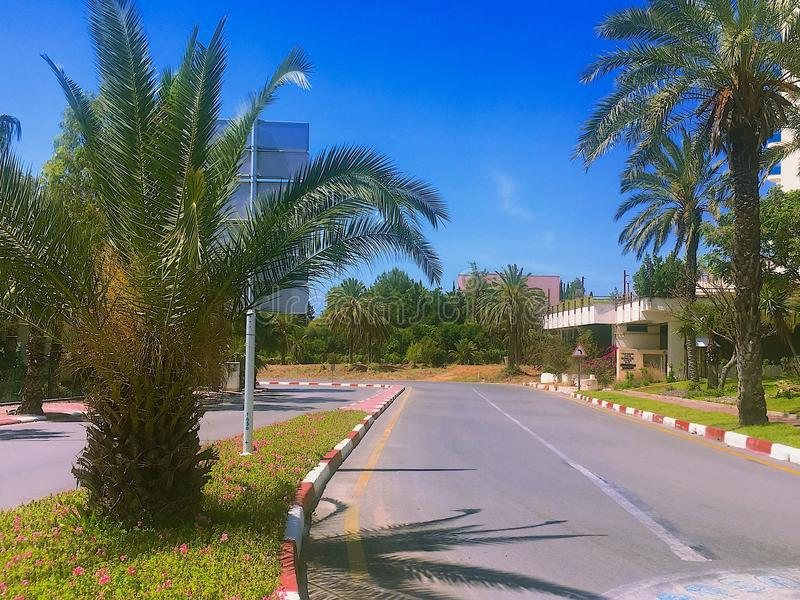 road with palm trees stock photography