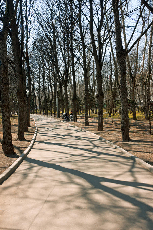 Download Road in the park stock image. Image of avenue, road, grass - 11782035
