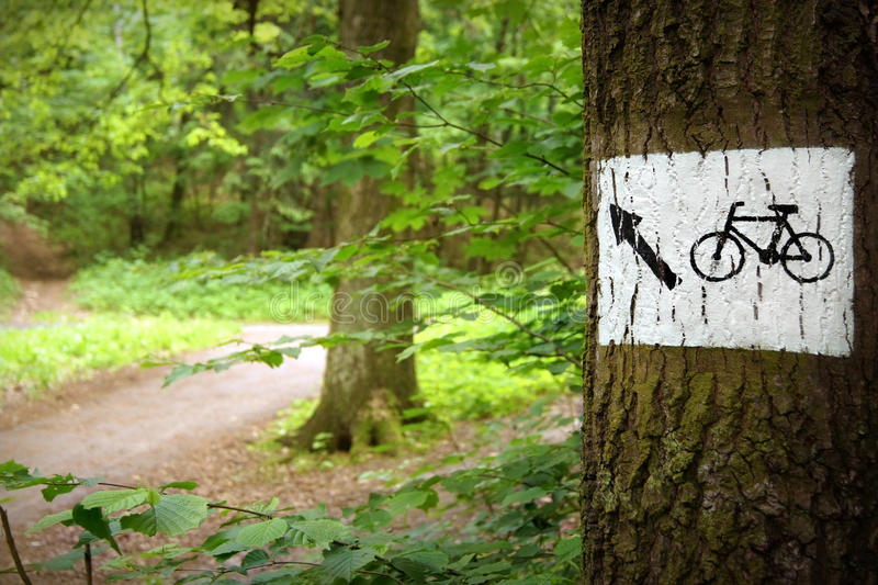 Download Road Through The Park stock image. Image of cycle, healthy - 14855799