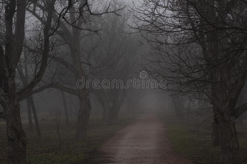 The road in the Park in the fog stock photos