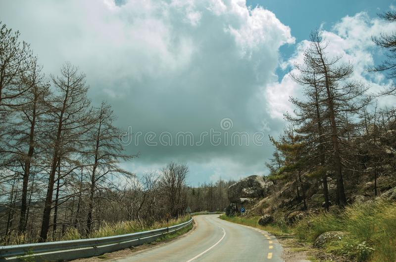 Road passing through burnt forest on rocky landscape royalty free stock photo