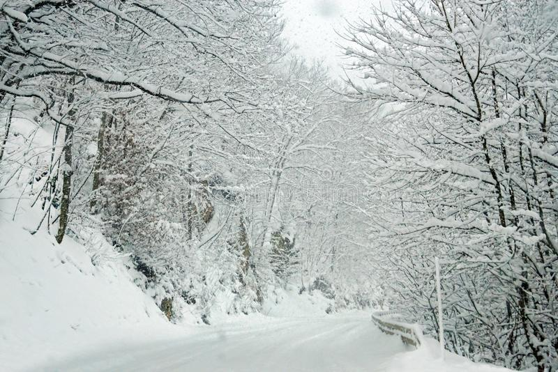 Empty road and trees covered with snow. stock images