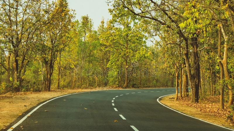 Road, Path, Nature, Yellow royalty free stock images