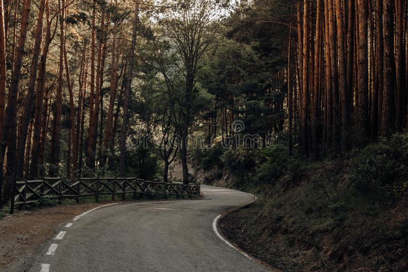 Road between pines in the mountains in the north of Spain royalty free stock photo