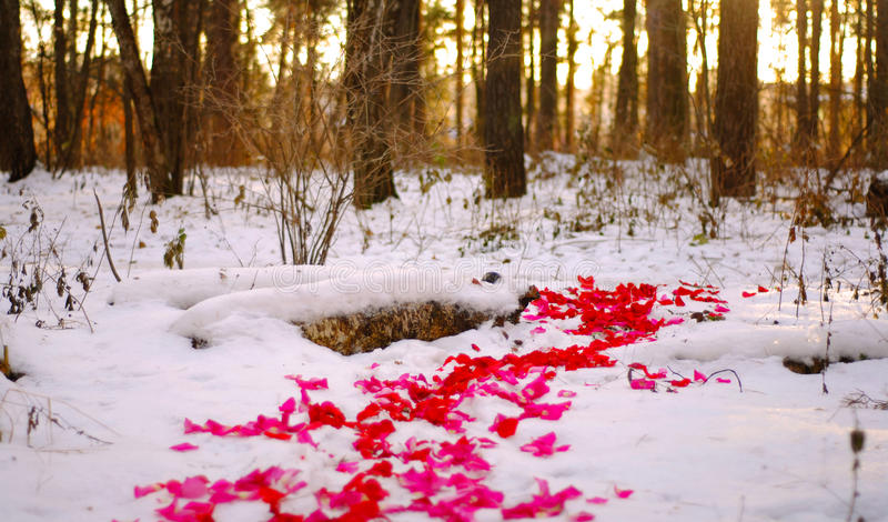 Download Road of rose petals stock image. Image of cold, love - 83707497