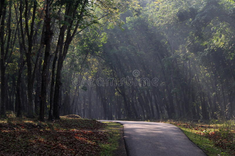 Download A Road In Rubber Plantation Stock Photo - Image: 15080708
