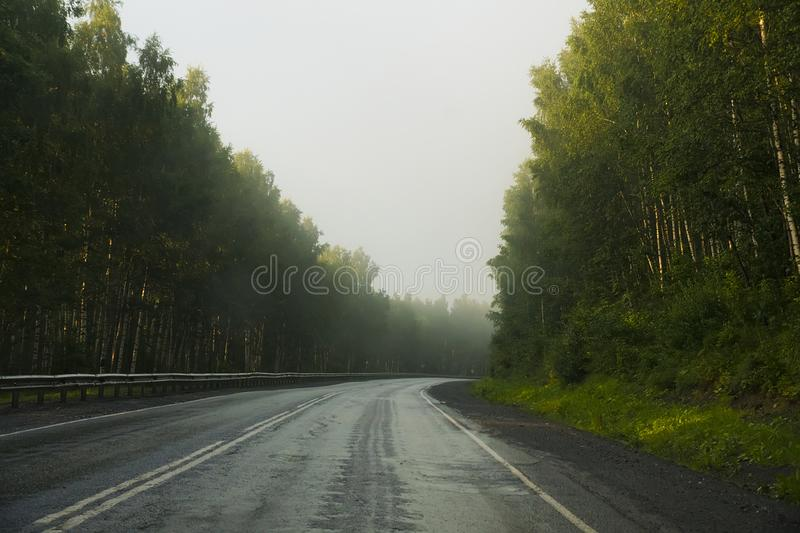 Road running through a forest stock images