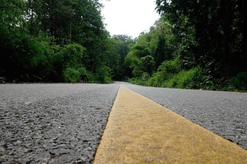 The road that runs ahead is a green forest and a yellow road line.  royalty free stock photo