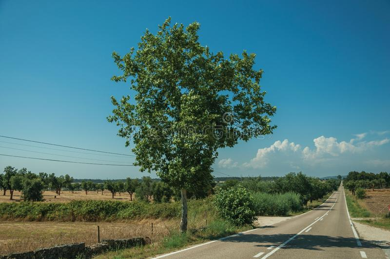 Road through rural landscape with farmed fields and tree royalty free stock photos