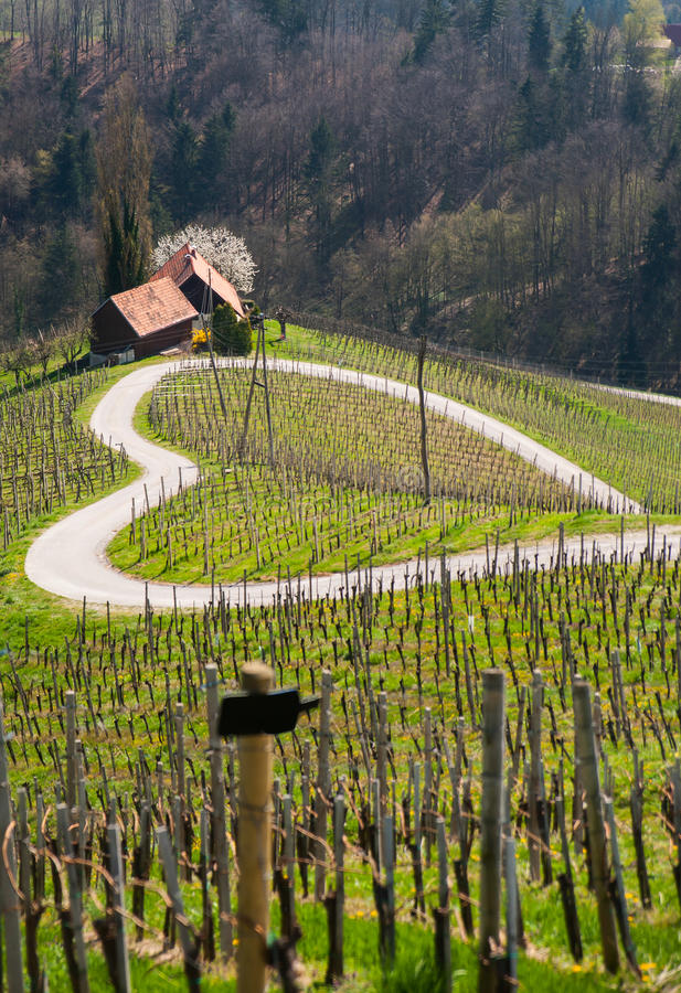 Road in a shape of a heart, Maribor. Road in a shape of a heart near Maribor, Slovenia stock photo