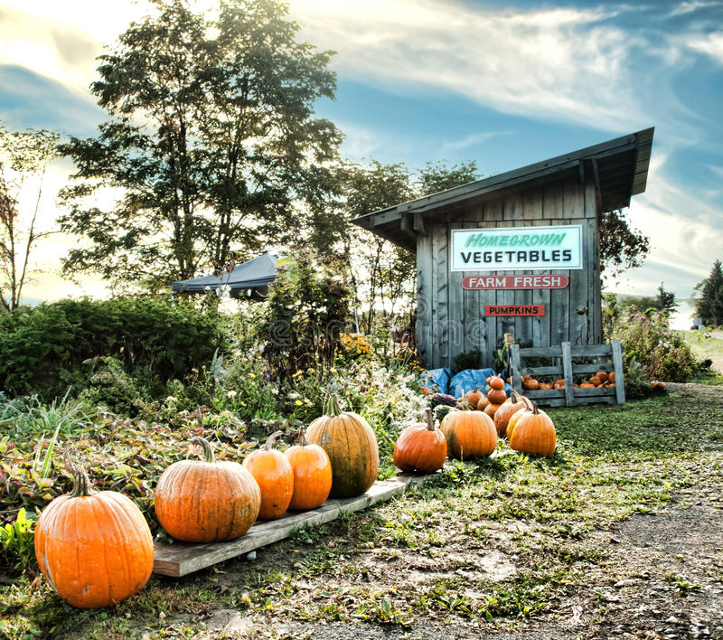 Road-side vegetable stand. Roadside vegetable and pumpkin stand stock photos