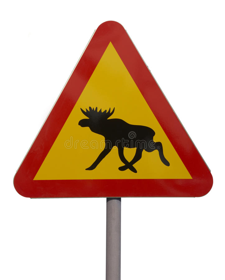 Road sign with picture of moose. Triangular road traffic sign warning of moose stock image
