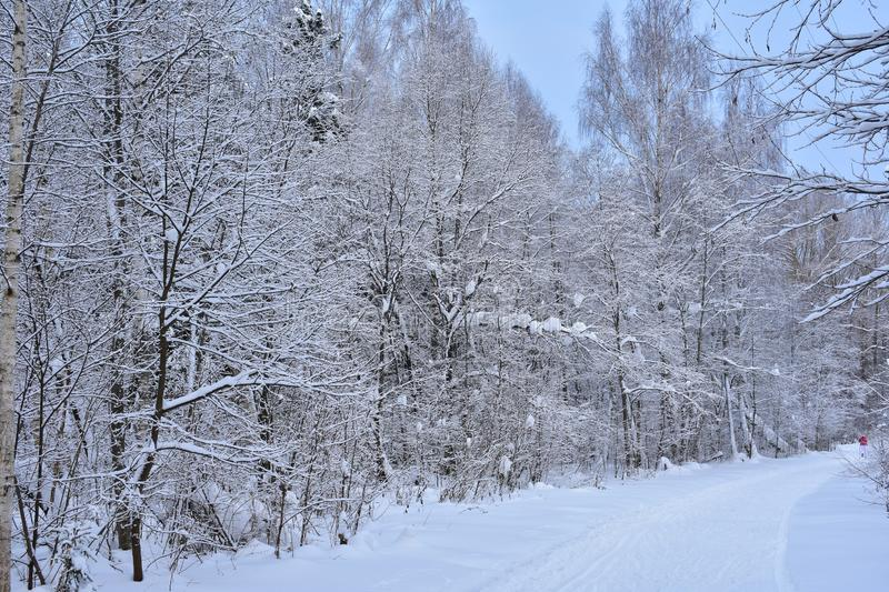 Road skiing and winter forest live their lives. Everything is quiet and solemn in the winter forest. He seems to be asleep royalty free stock images