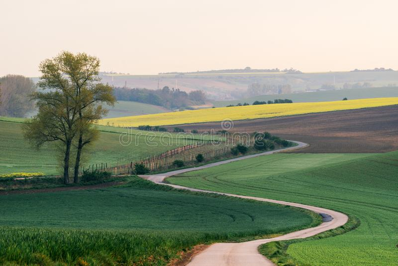 Road somewhere in South Moravia through the Rapeseed. Rural landscape with green fields, auto road and waves, South Moravia, Czech Republic stock photography
