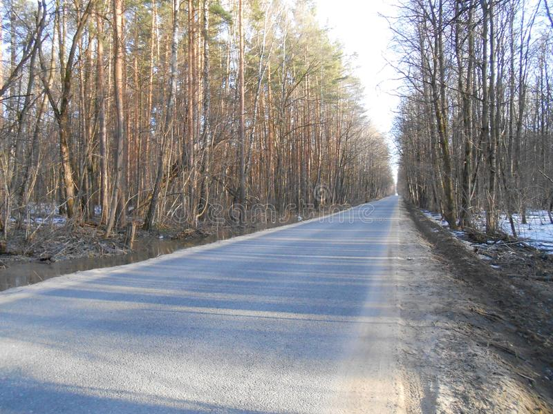 Road in start of spring in sunny day with high trees and shadows. royalty free stock photos