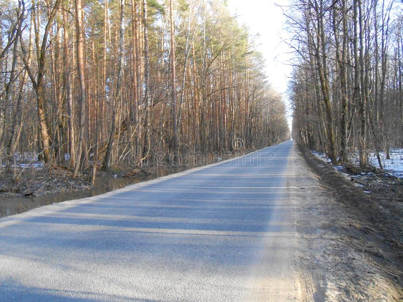 Road in start of spring in sunny day with high trees and shadows. royalty free stock photography
