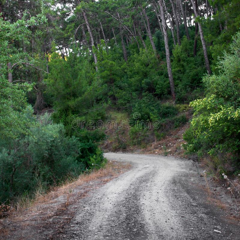 Road in summer tropical pine forest. Outdoors. Path stock images