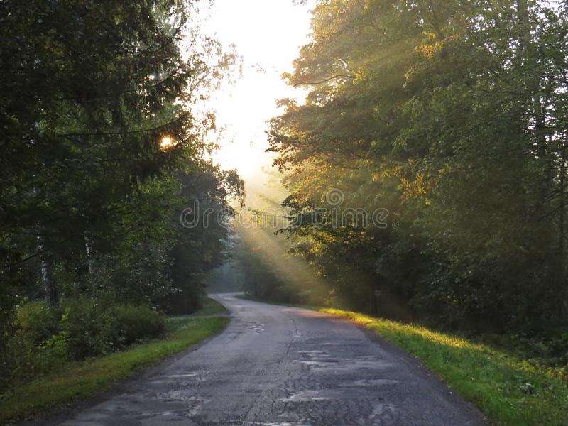 Road with Sun Beam in Beautiful Nature Wild Landscape Sunrise with Foggy Mist royalty free stock photo