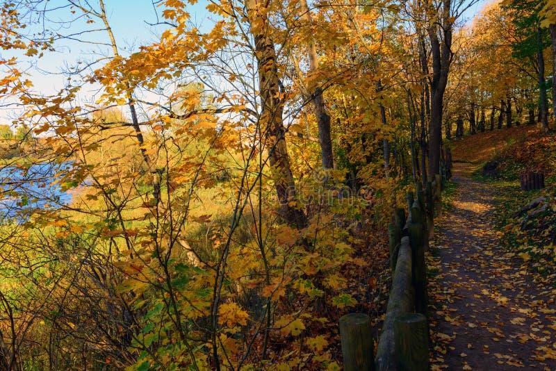 Road in sunny autumn park near Bauska town, Latvia.  royalty free stock image