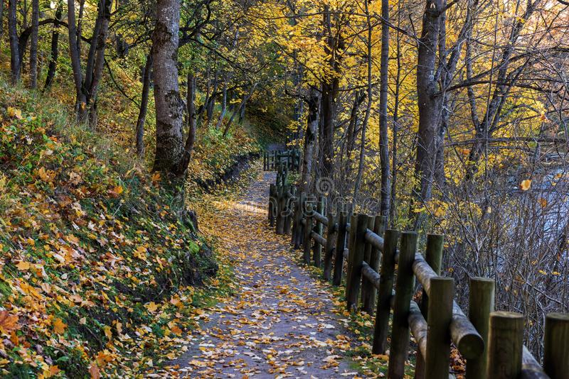 Road in sunny autumn park near Bauska town, Latvia.  royalty free stock images