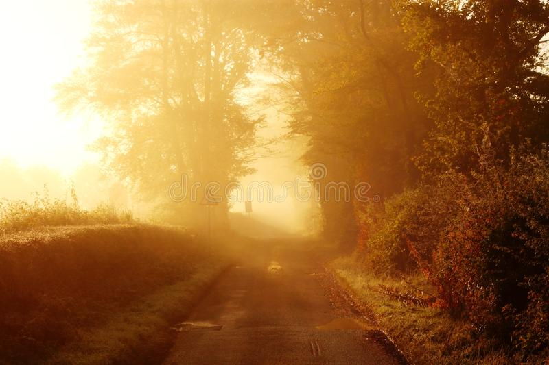 Road At Sunrise Royalty Free Stock Images