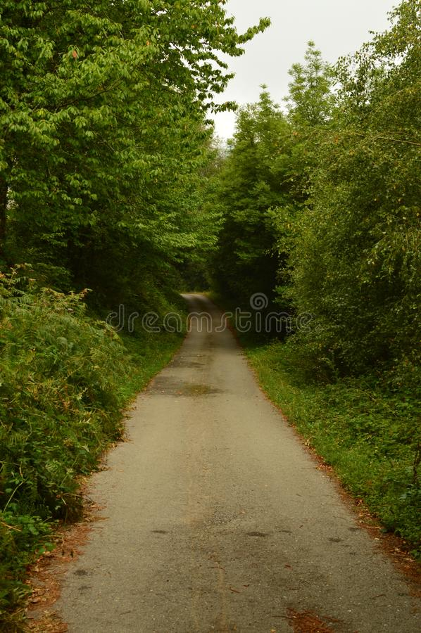 Road Surrounded By Weeds, Pines And Eucalyptus In The High Of A Mountain In Lugo In Galicia. Nature, Animals, Landscapes, Travel. August 2, 2018. Rebedul, Lugo royalty free stock images