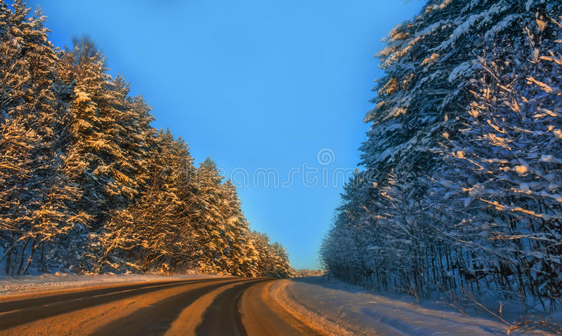 Road among the tall snow-covered trees royalty free stock images