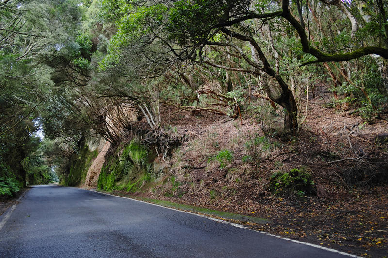 Road TF-12 in Anaga Rural Park - ancient forest on Tenerife, Can. Ary Islands, winter travel destination stock image